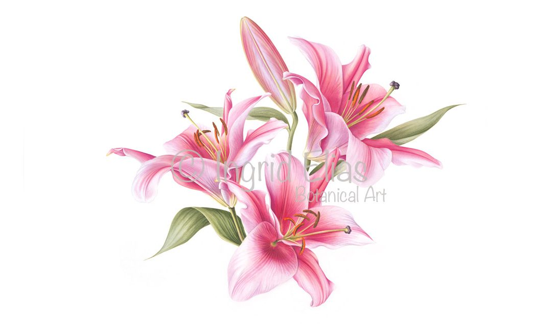 Ingrid Elias Botanical Art