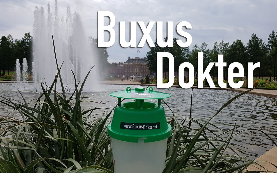 Buxus dokter