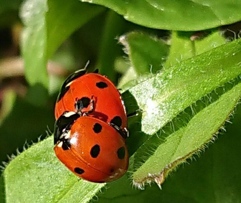 Plaagdieren zijn onmisbaar voor meer biodiversiteit in je tuin