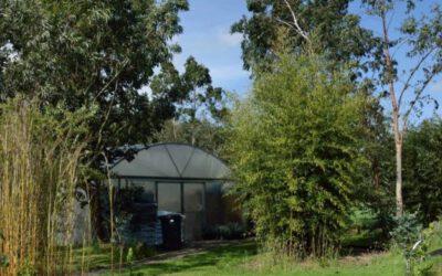 Kwekerij Koala