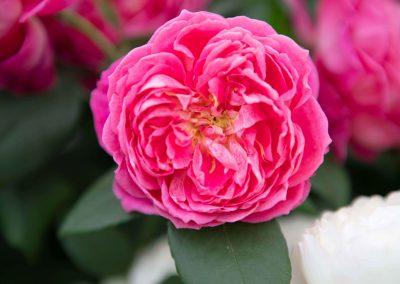 website (34) Gardenista-36