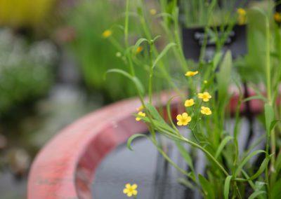 website (38) Gardenista-42